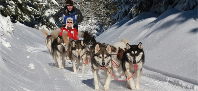 Hundeschlittenfahrt Thüringer Wald Huskyerlebnisse Unterwegs Erfurt