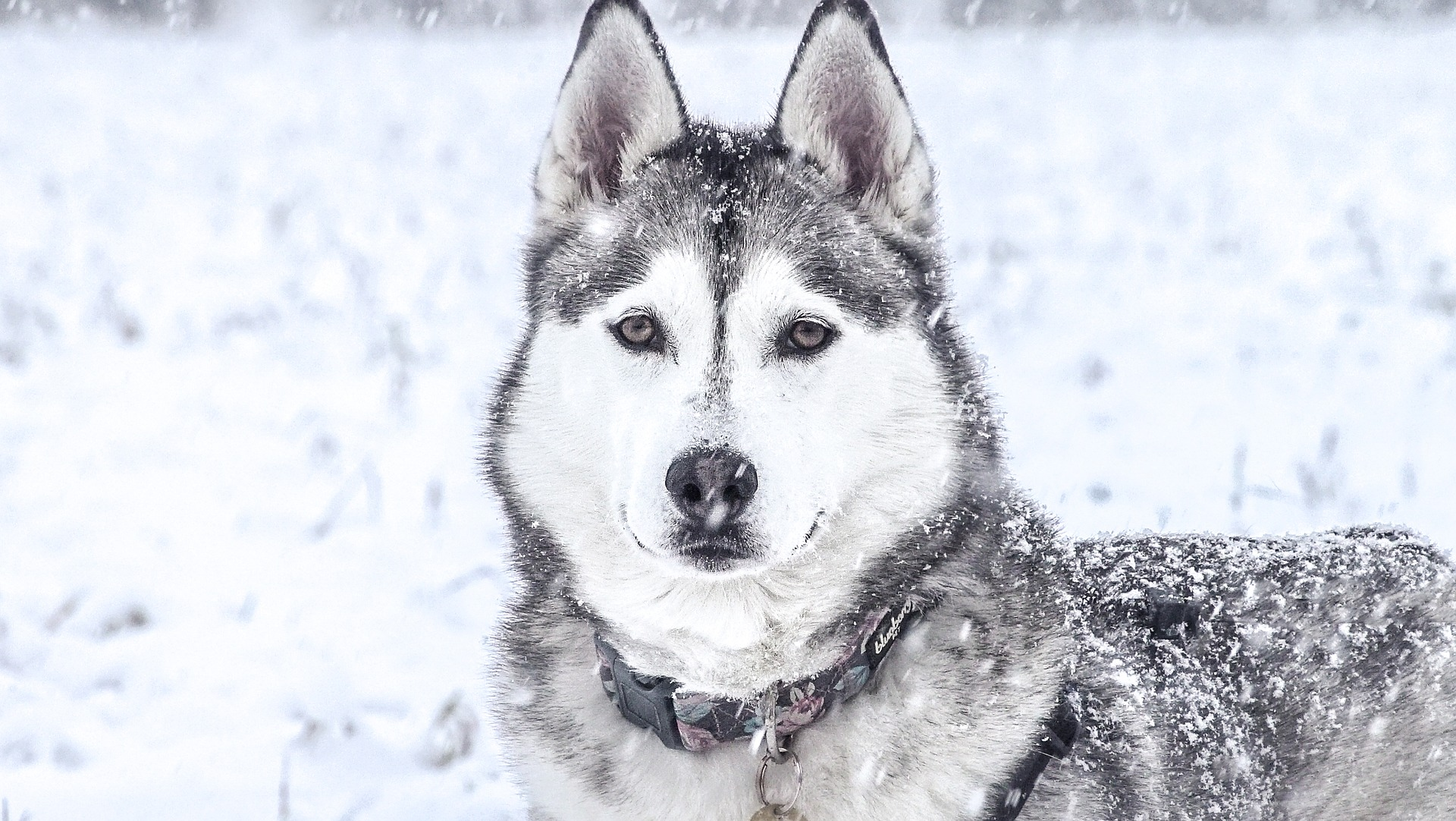 Outdoor-Erlebnis Hundeschlittenfahrt