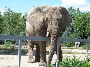 Elefanten im Erfurter Zoo