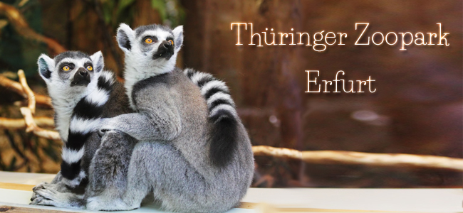 Thüringer Zoopark Unterwegs Erfurt
